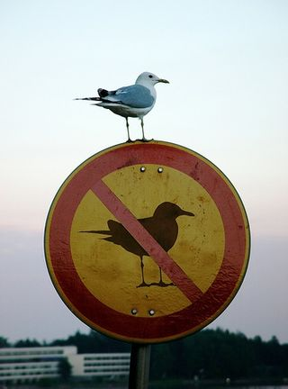 Funny bord on no bird sign